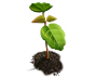 plant and tree selection icon